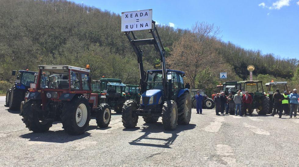 «Axudádenos!»: cientos de agricultores denuncian sus graves pérdidas en Viana