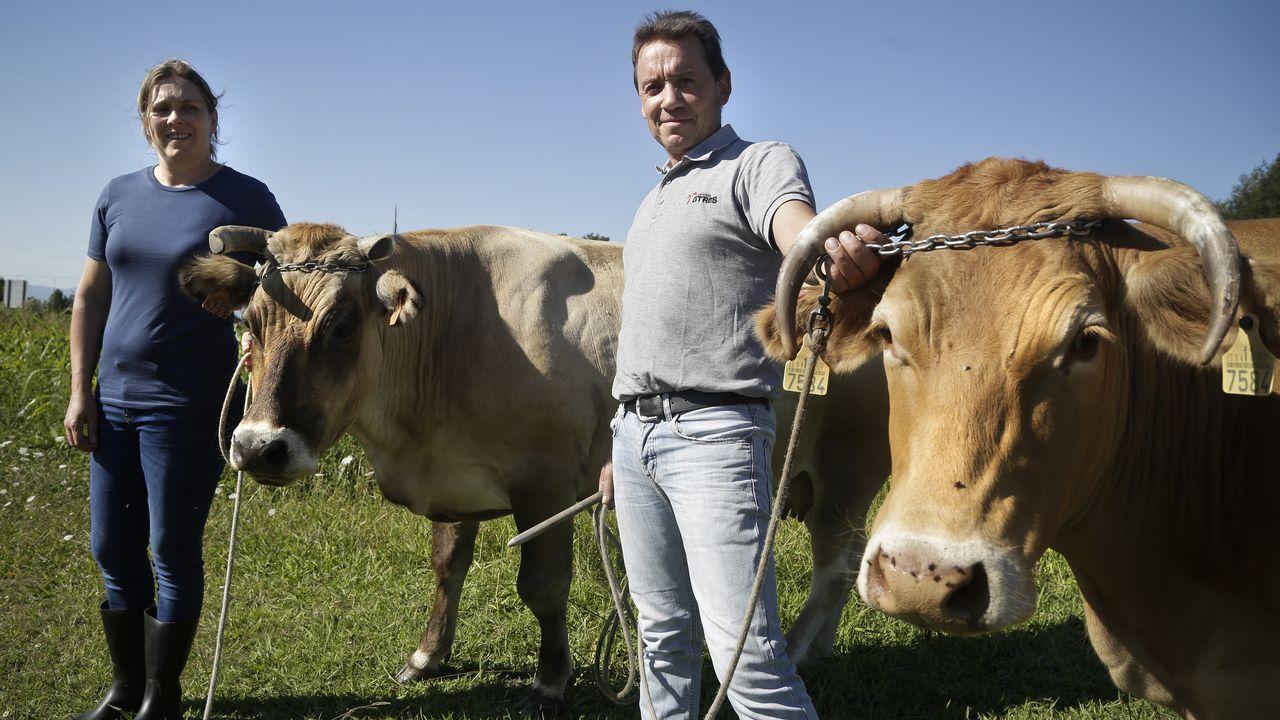 Las últimas vacas de Sanxenxo