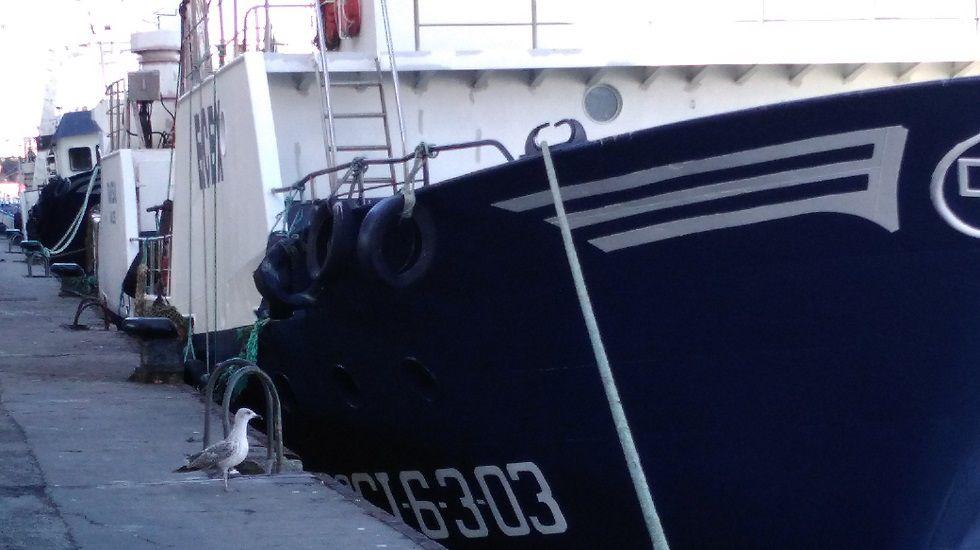 Gaviota junto a un pesquero en Avilés