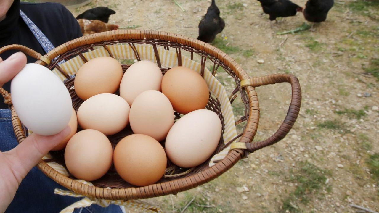 En cuestión de huevos... Galicia no tiene rival