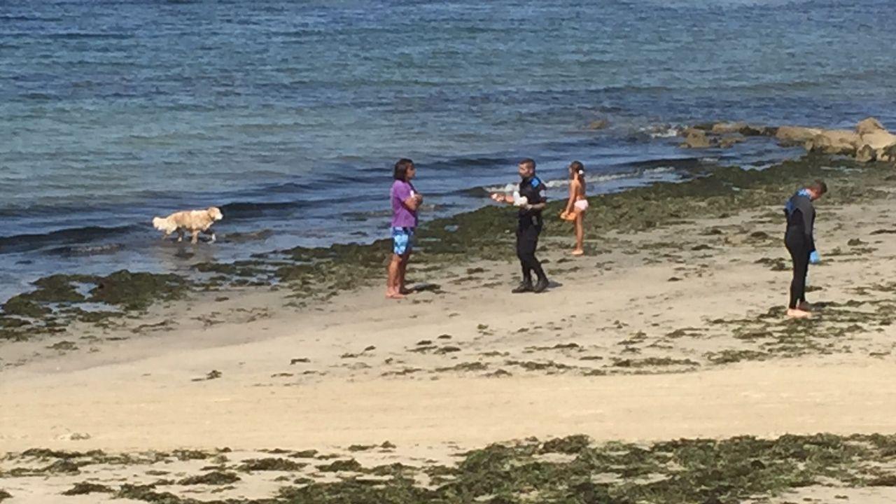 Prohibidos los perros en la playa para perros