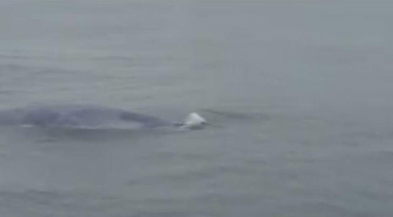 Esta ballena sorprendió a los guardacostas surcando la ría de Muros