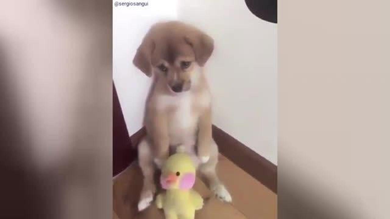 La reacción de este perrito a la bronca de su dueño te conmoverá