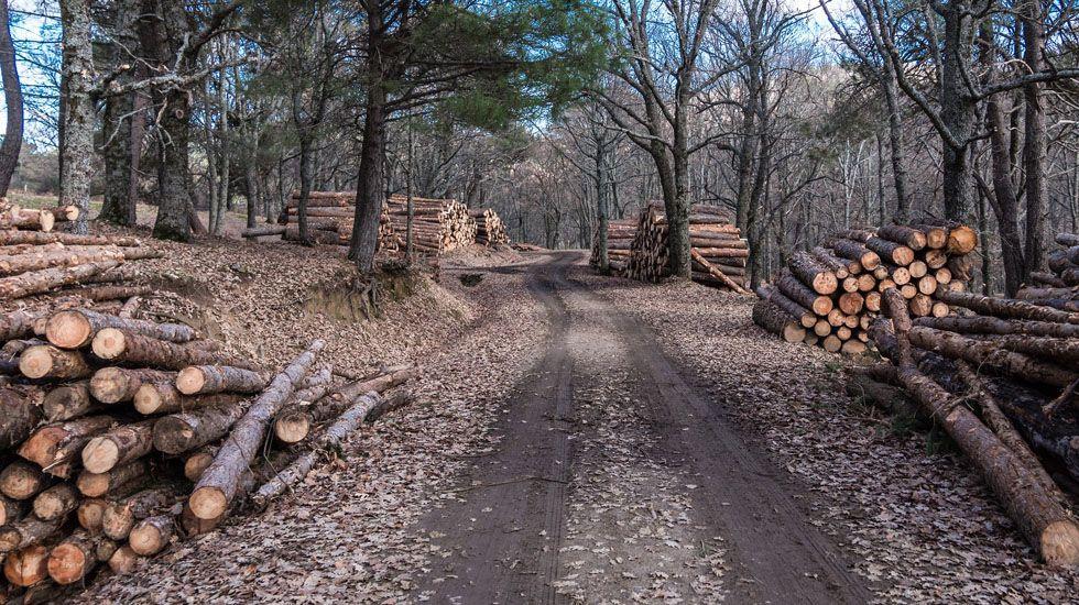 Aguardiente de sidra a la madera de casta o - Madera de castano ...