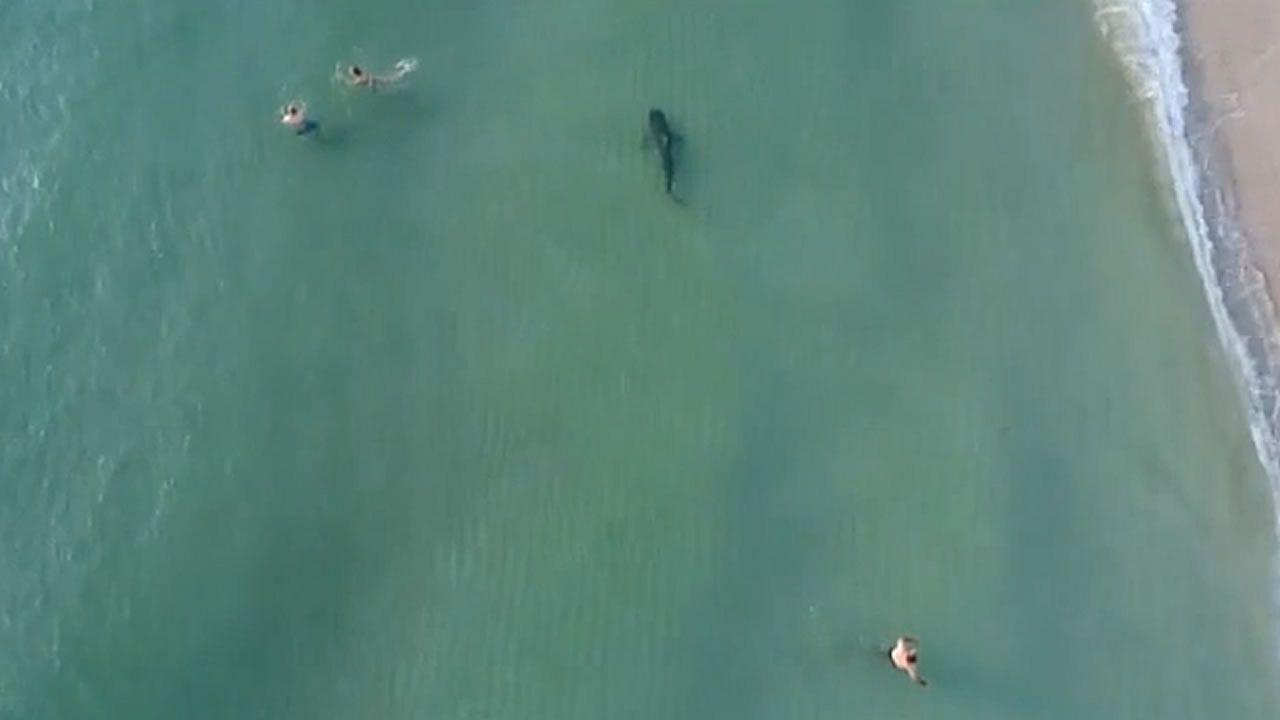 Nadando junto a un tiburón sin saberlo