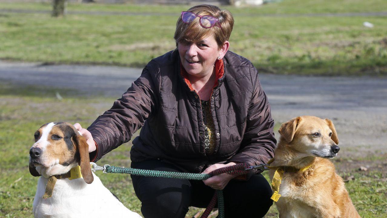 A estos perros sí los quieren en Inglaterra
