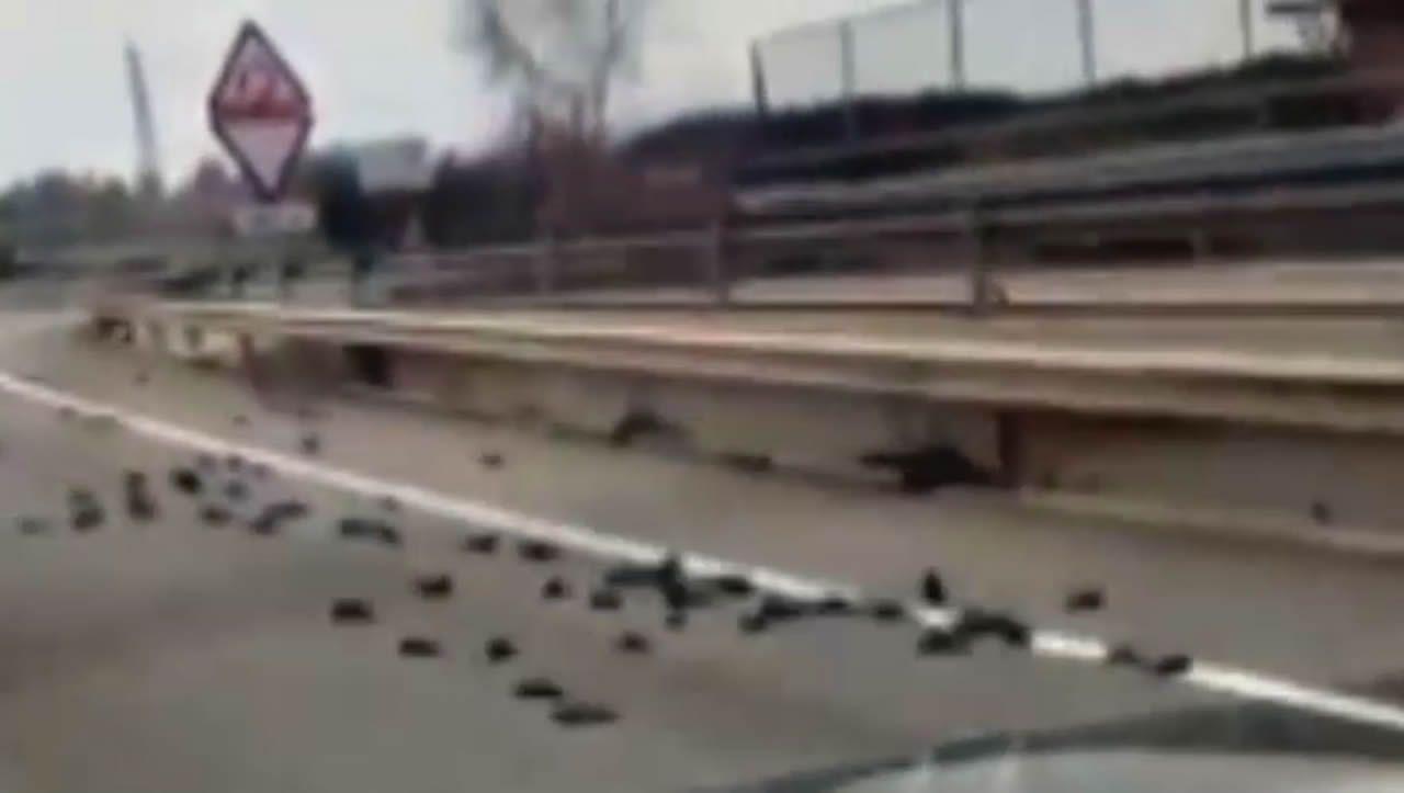 Aparecen decenas de pájaros muertos cerca de la petroquímica que estalló en Tarragona