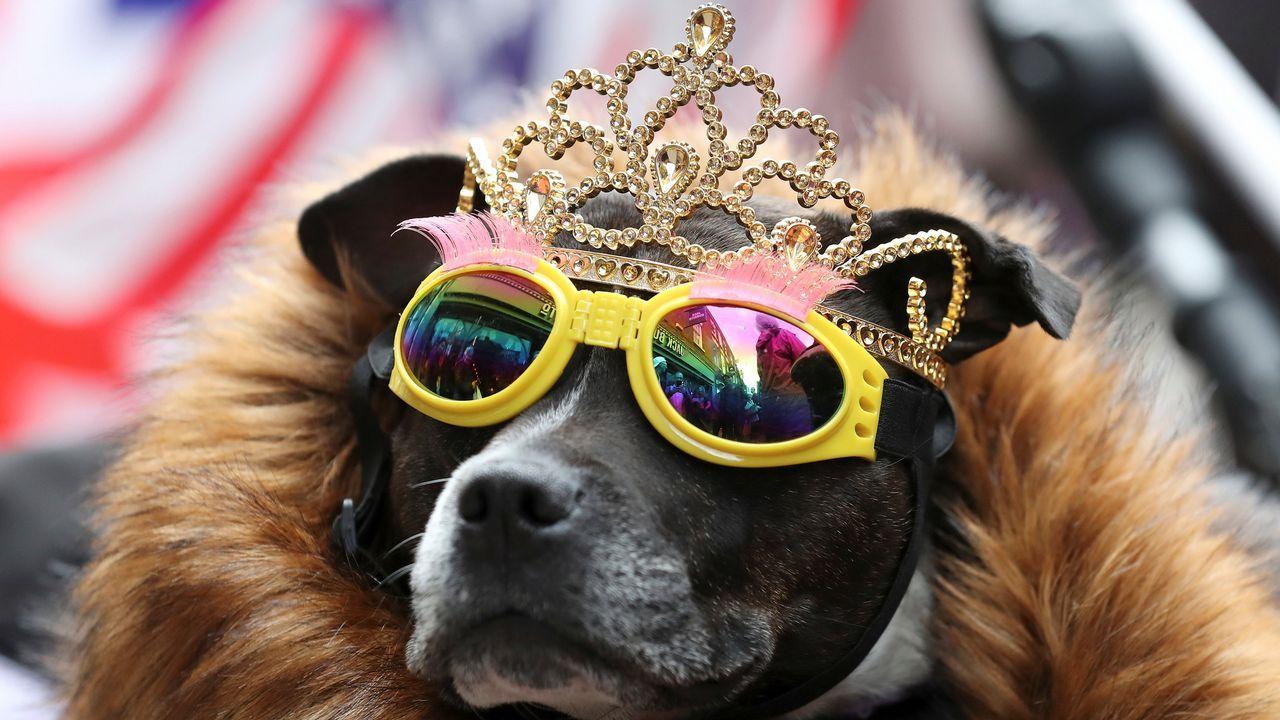 .Un perro con tiara y gafas de sol durante la visita de la reina Isabel II y de la duquesa de Sussex a Chester