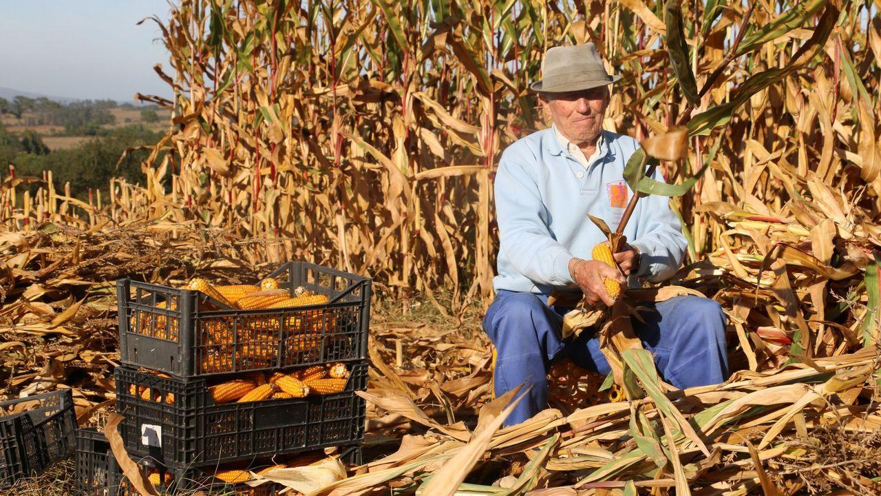 Mesa electoral.Pablo Casado acaricia un ternero en una granja de Zamora