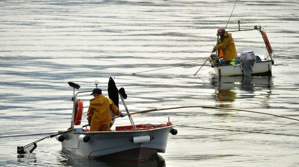 .Mariscadores a flote en el banco de As Pías