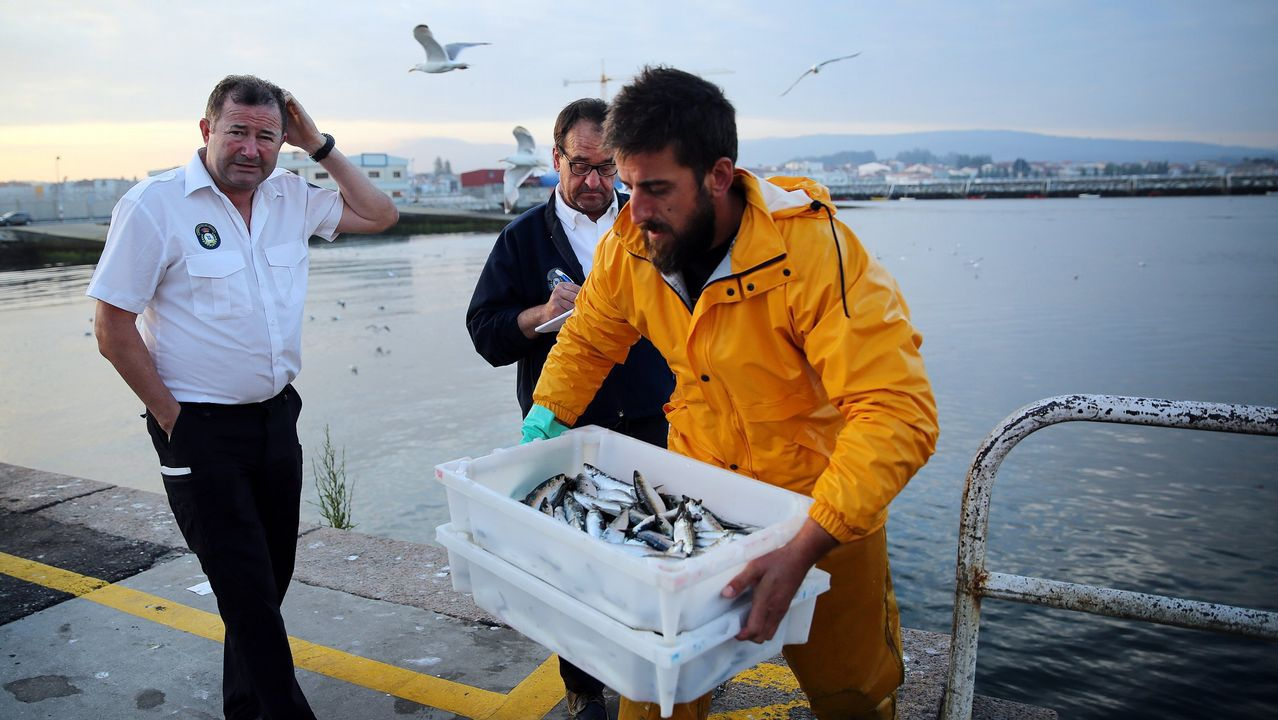 Sardina a 14,5 euros el kilo en la lonja de A Coruña.El tope para la descarga de sardina del xeito volverá a ser diario el próximo día 2 de julio