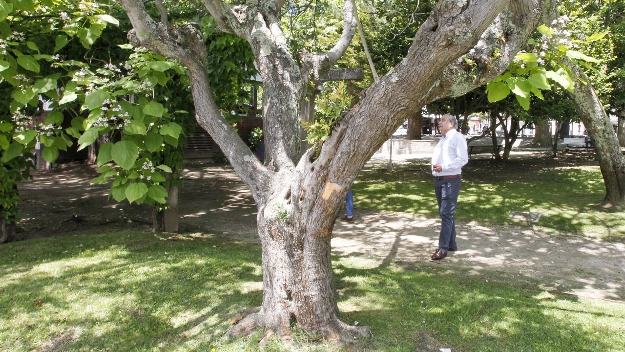 Seis recuerdos en forma de árbol