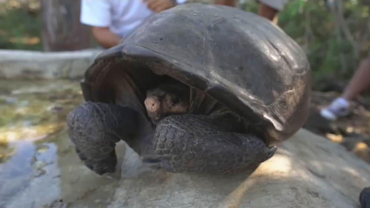 Encuentran a una tortuga que se creía extinguida hace un siglo
