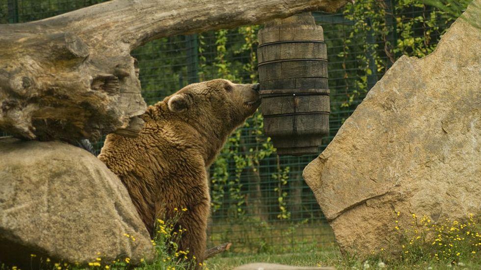 Un oso en una colmena