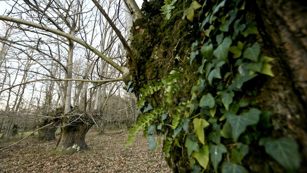 Siete detenidos en relación a una joven que apareció muerta en un embalse de Ourense.Puente sobre el embalse de Lindoso