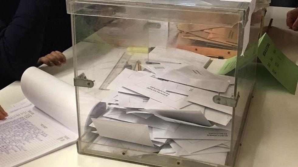 Un ejemplar de lobo.Una urna con votos