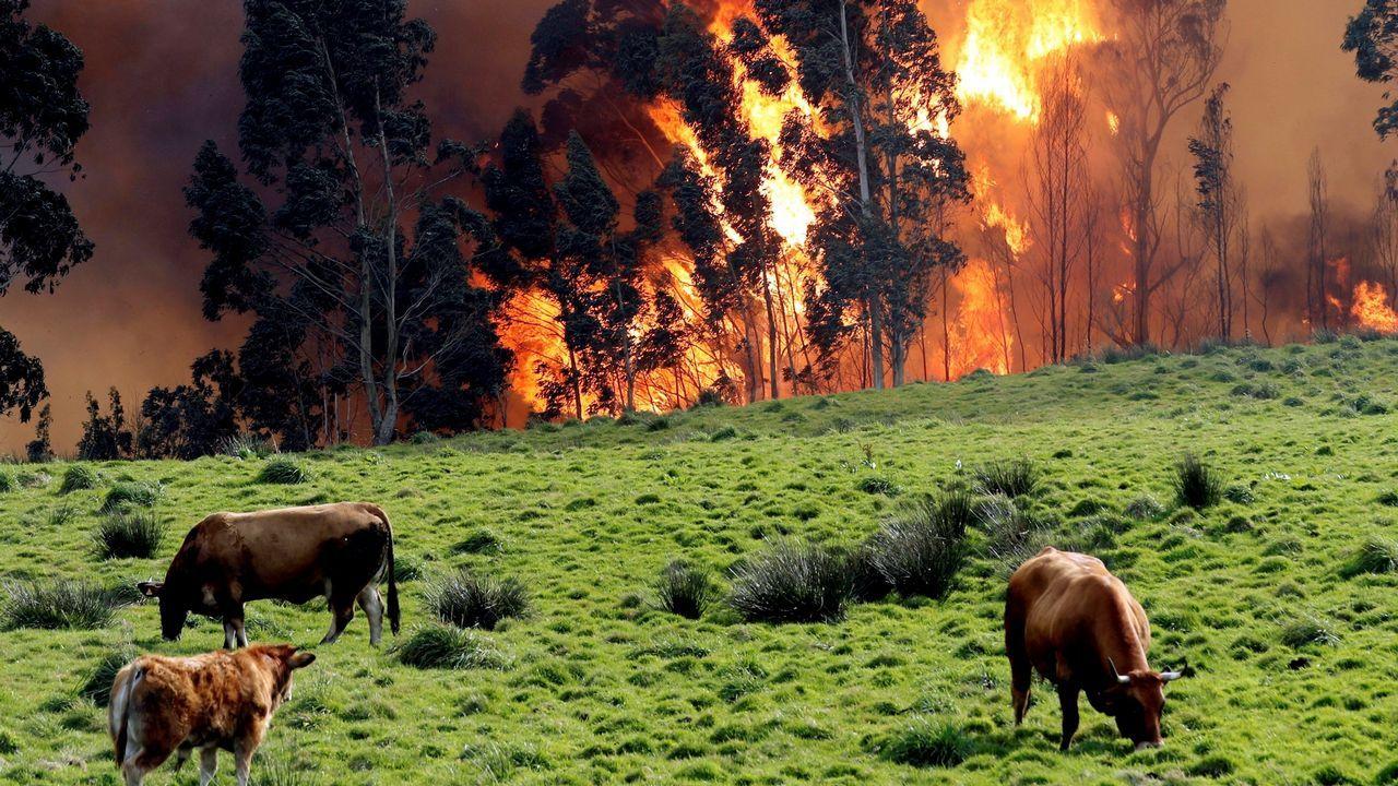 La crudeza del fuego asturiano en imágenes.Miembros de la Unidad Militar de Emergencias (UME) tras participar en la extinción de un incendio en Naves