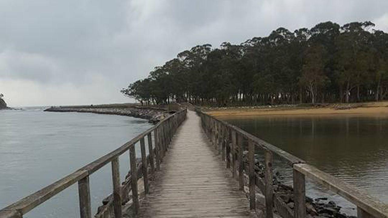 El eucaliptal de la playa de Rodiles