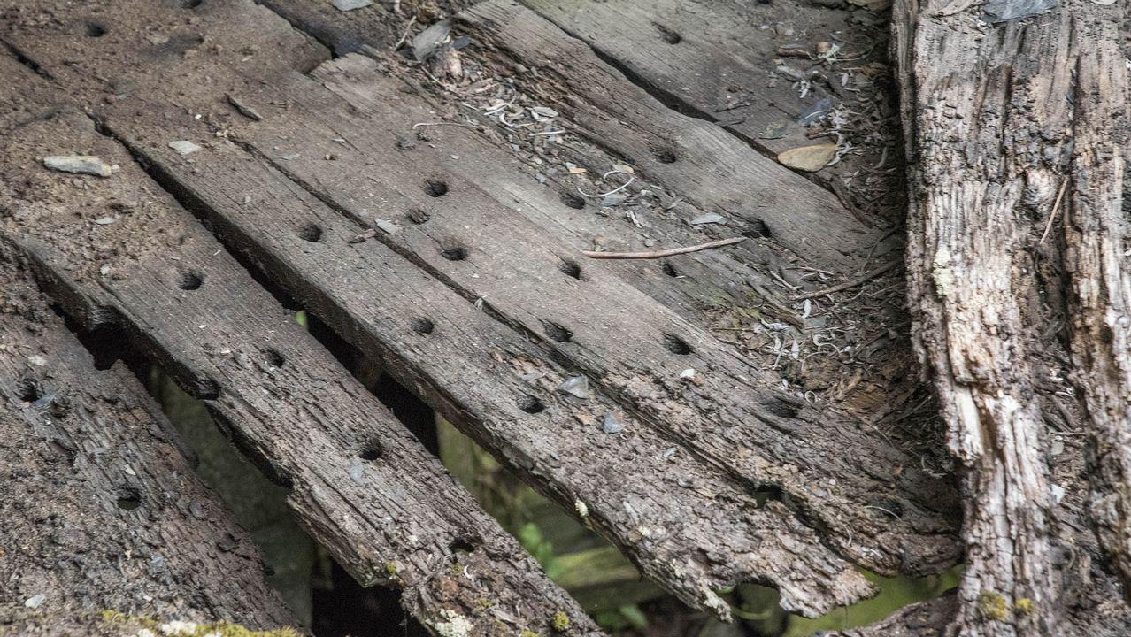 .Tablas de un canizo, la plataforma donde se ponen a secar las castañas, en uno de los sequeiros abandonados