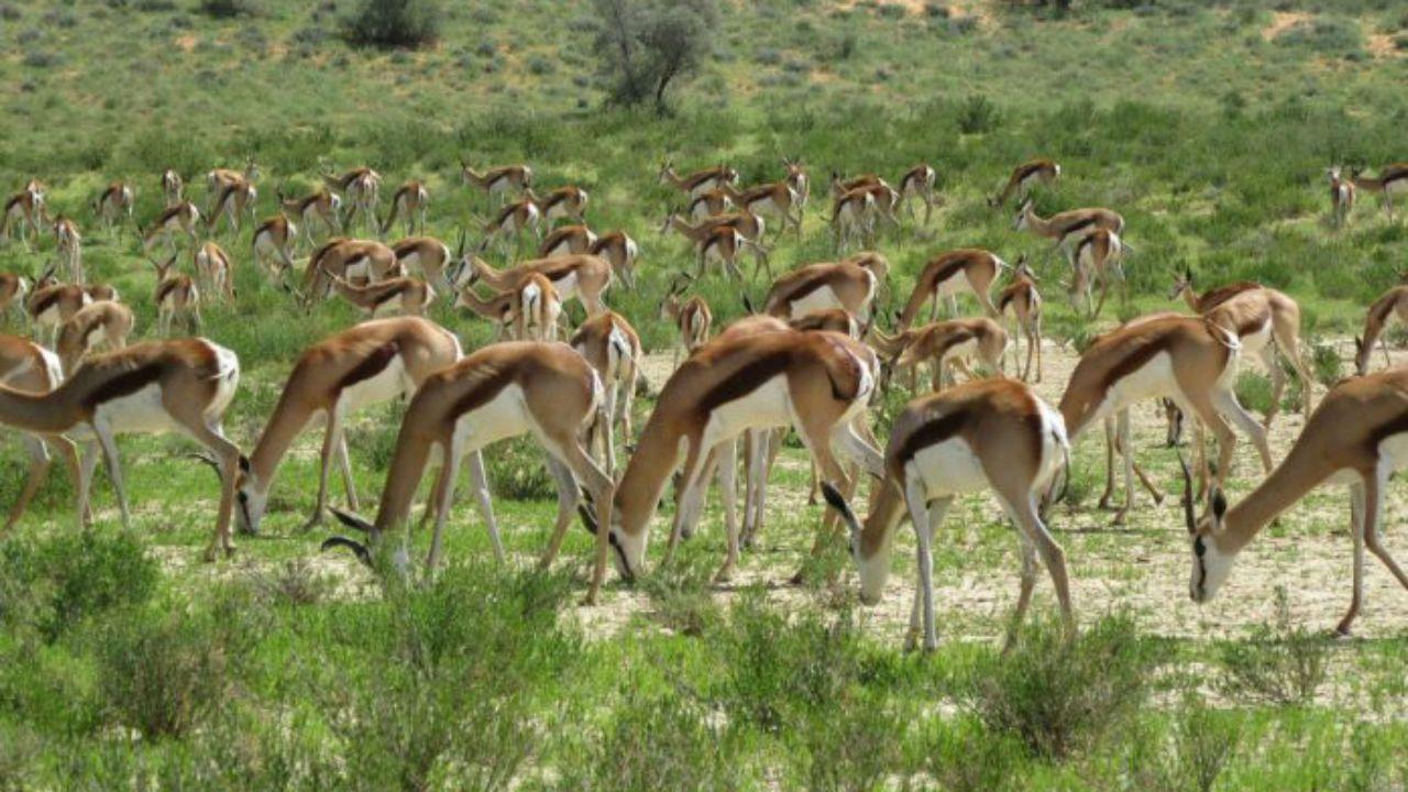 Parque transfronterizo de Kgalagadi