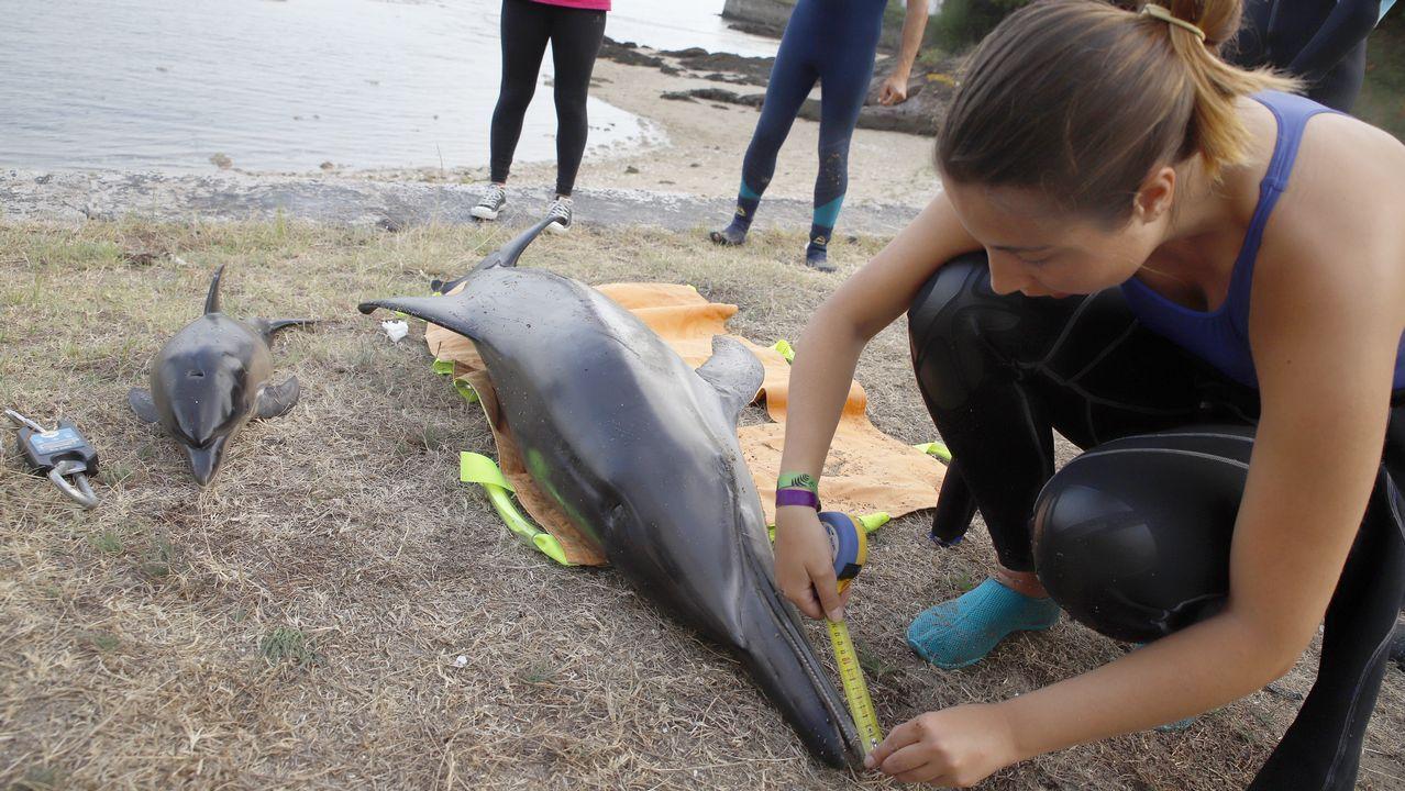 Al rescate de un arroaz en Pontevedra